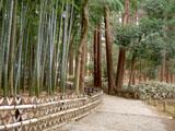 竹林と杉林