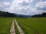 湿原と木道