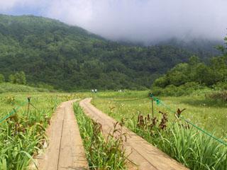 栂池自然園の木道
