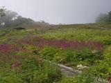 アルプス山野草園