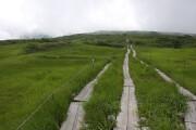 弥陀ヶ原湿原