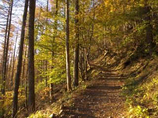 カラマツの樹林帯