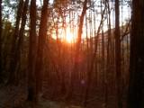 木々の間から差し込む光