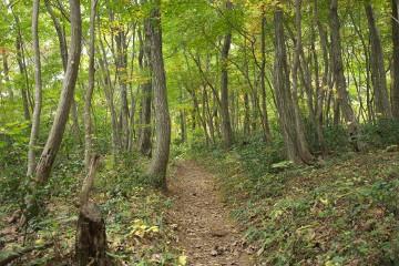 ちご道登山口からの道