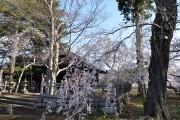 新城藤原神社