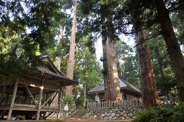 神楽殿と杉