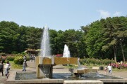 井頭公園 バラ園