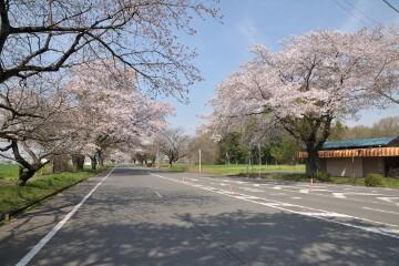県道井頭公園線
