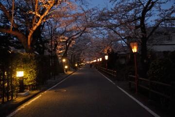岳温泉桜坂