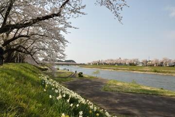 桧木内川堤
