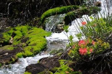 渓流とチャツボミゴケ