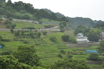 千枚田水仙園