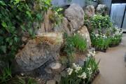 水仙鑑賞庭園