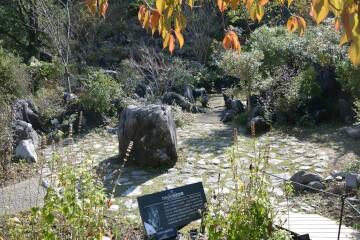 石灰岩植生園