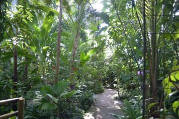 ジャングルゾーンの植物