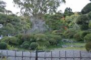 本芳我家の庭園